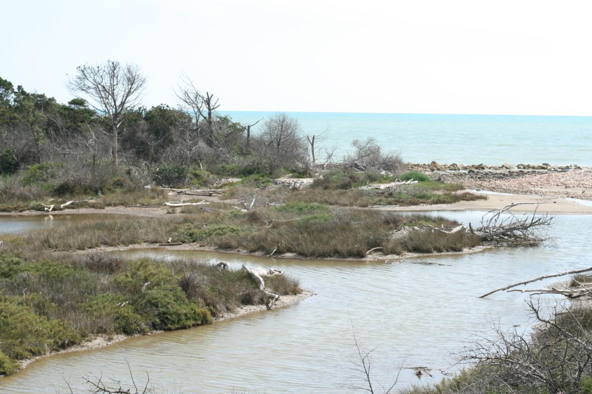 A7 Foce del fiume Ombrone